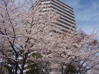 20080329_kawaguchi