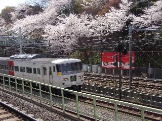20080329_ouji