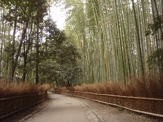 Kyoto_uta3