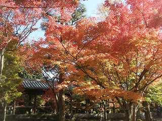 Toufukuji1011_05