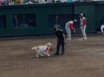 baseball05-09-17_0006