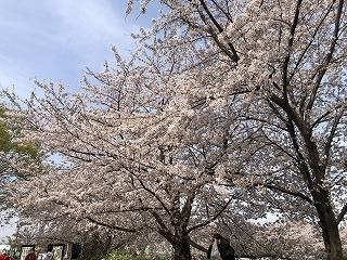 Kashiwa0327003